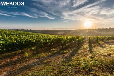 ventajas del marketing para las bodegas de vino