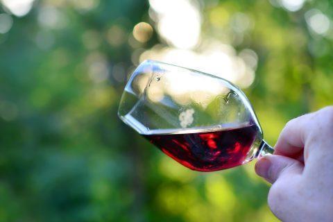 Crecimiento sector vinitícola